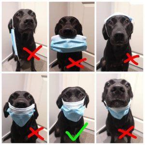 dog wearing a mask